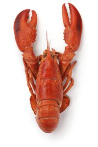 Shoreside Facilities Southwest Harbor Lobster